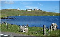 HU5562 : Loch of Huxter by Des Blenkinsopp
