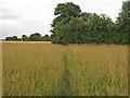 TL6306 : Footpath through meadow, Cooksmill Green, Roxwell by Roger Jones