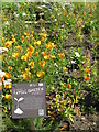 NT2475 : Californian Poppies in the Physic Garden by M J Richardson