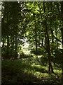 SO9640 : Long Plantation by Derek Harper