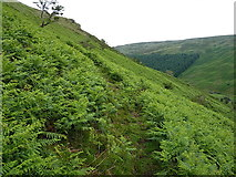 SH9621 : Sheeptrack through the bracken by Richard Law