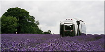 TQ2760 : Mayfield Lavender by Peter Trimming