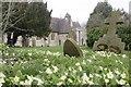 SU5599 : View across the primroses by Bill Nicholls