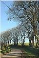 SX0878 : Trees by the lane, Michaelstow by Derek Harper
