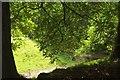 SX8778 : Horse chestnut, Ugbrooke Park by Derek Harper