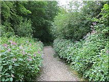 SE2433 : Footpath from Wood Lane to Post Hill Leeds Nature Area by Peter Wood