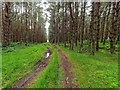 NH7956 : Carse Wood by valenta