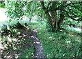 NO1801 : Path to Bishop Hill, Lomond Hills by Bill Kasman