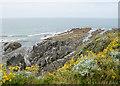 SS4544 : Rocky shore at Woolacombe by Bill Boaden