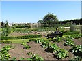 J5080 : Vegetable plots at The Castle Walled Garden by Eric Jones
