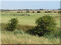 TA3618 : Grazing land near Skeffling by Paul Harrop