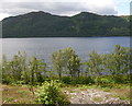 NH4159 : Birch trees, by Loch Garve by Craig Wallace