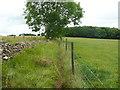 SO8607 : Footpath to The Frith, Slad by Humphrey Bolton