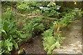 SX6787 : Water gardens, Gidleigh Park by Derek Harper