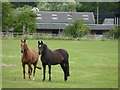 SO9558 : Horses on Saldons Farm, Earls Common by Jeff Gogarty