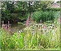 TG2701 : Pond in the Memorial Garden, Poringland by Evelyn Simak