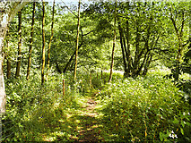 SK0247 : Path through Nature Reserve near Kingsley and Froghall Station by David Dixon