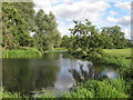 TM3291 : The Waveney at Outney Common, Bungay (2) by Roger Jones