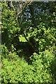 ST4707 : Path through the trees north of Sockety by Derek Harper