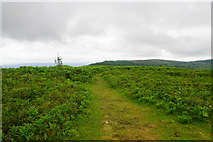 ST1734 : Path on Lydeard Hill by Bill Boaden