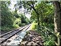 SJ9744 : Foxfield Railway at Dilhorne Park by Gerald England