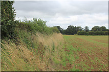 SE7466 : Field beside the Road to Kirkham by Chris Heaton