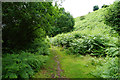ST1341 : Path in Smith's Combe by Bill Boaden
