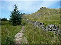 SD7558 : The Gisburn Red Bike Trail near Whelp Stone Crag, Rathmell by Humphrey Bolton