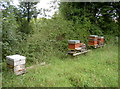 ST5059 : Beehives near the sewage works by Neil Owen