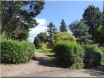 SS8712 : Specimen trees in the garden of Cruwys Morchard House by David Smith