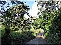 SS8712 : Trees and valley at Cruwys Morchard by David Smith