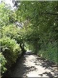 SS8711 : Farley Plantation, near Highgate by David Smith