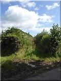 SS8811 : Overgrown track near Lythe-land by David Smith