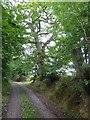 SS8811 : Heath Lane with hedgebanks by David Smith