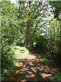SS9111 : Track along south-east edge of Cross's Wood by David Smith