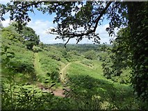 SS9110 : Tracks through the bracken covered hillside by David Smith