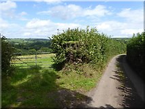 SS9110 : Field gate and road on Blackberry Down by David Smith