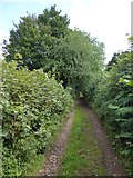 SS9109 : Larkey Lane close to Little Silver by David Smith