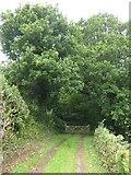 SS9208 : Gate into Ashilford Copse by David Smith