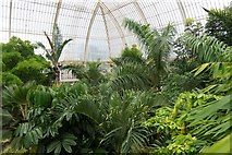 TQ1876 : The upper level inside the palm house, the Royal Botanic Gardens, Kew by Mike Pennington