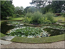 SX4268 : Cotehele gardens by Robert Ashby
