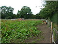 SK4653 : Piggery near Hall Green Farm by Christine Johnstone