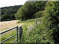 TQ7618 : Fence and hedge on southern side of Riccards Lane by Patrick Roper