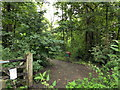 TQ5912 : Park Wood by PAUL FARMER
