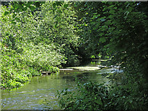 TQ0481 : The western arm of the River Colne west of Old Mill Lane (2) by Mike Quinn