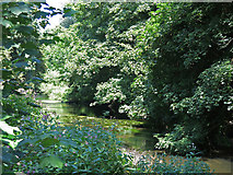 TQ0481 : The western arm of the River Colne west of Old Mill Lane (3) by Mike Quinn