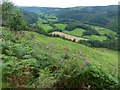 SN7081 : Overlooking the Melinddwr valley by Robin Drayton