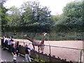 SO9490 : Giraffes Enclosure by Gordon Griffiths