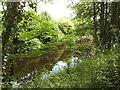 SE3967 : Milby Cut, Boroughbridge by Stephen Craven