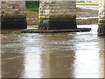NT9953 : Under the Royal Border Bridge by Oliver Dixon